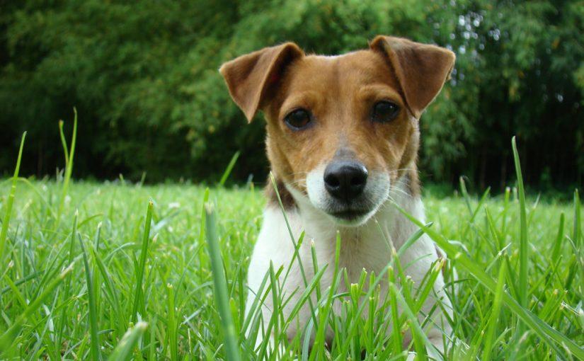 Hvordan få hunden din til å sitte stille når du skal ta bilder? Sette den i bur?